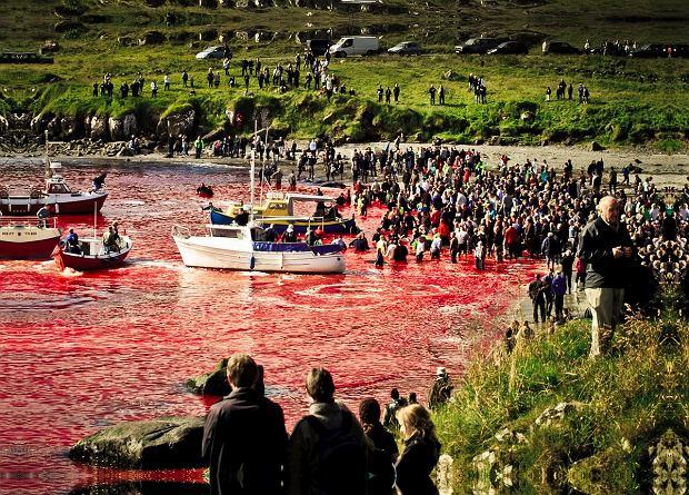 Krwawe tradycje z udziałem zwierząt [DRASTYCZNE ZDJĘCIA]