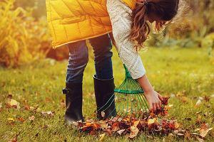 Jakie akcesoria ogrodowe wybrać? - te pomogą w jesiennych porządkach
