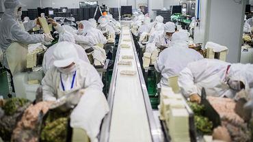 Fabryka żywności w Szanghaju. Linia produkcyjna pierogów.