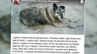 W Wołominie stanie pomnik bezpańskiego psa