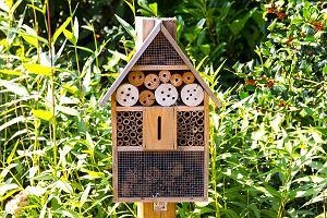 Domek dla owadów w ogrodzie. Dlaczego warto o nim pomyśleć przed jesienią?