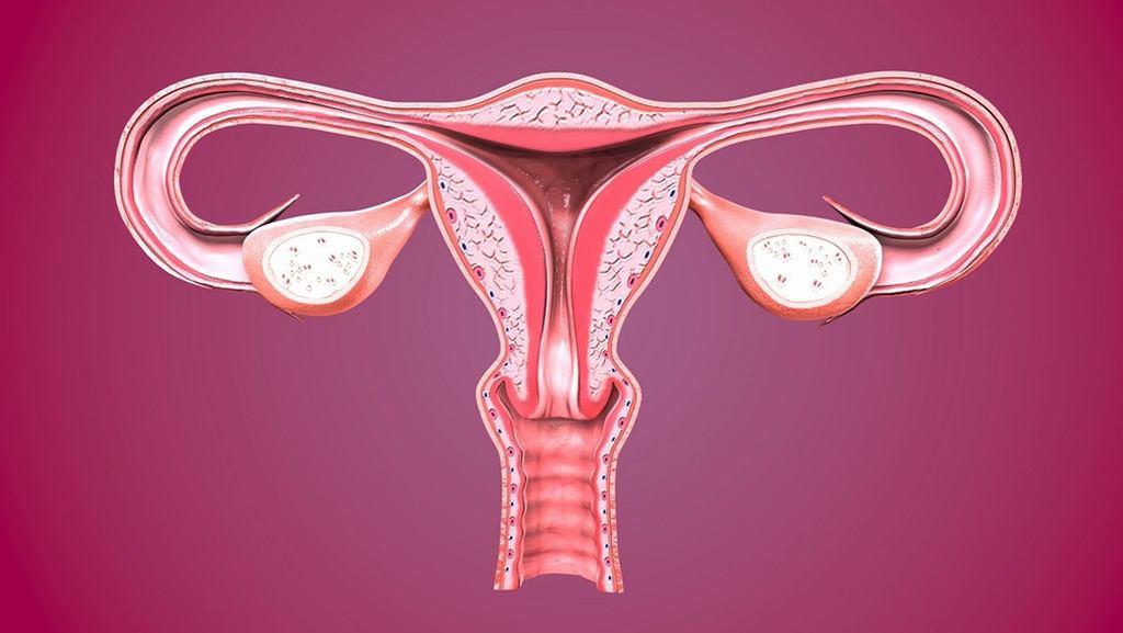 Jak powinna wyglądać szyjka macicy w ciąży?