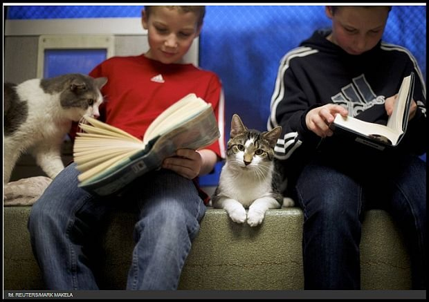 Poczytaj kotkowi