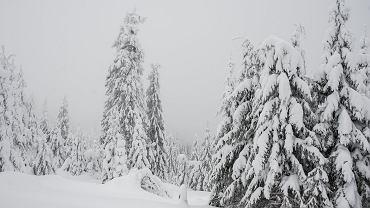 Zamieć śnieżna w górach (zdjęcie ilustracyjne)