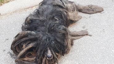 Skrajnie wyczerpany pies znaleziony w Łodzi.