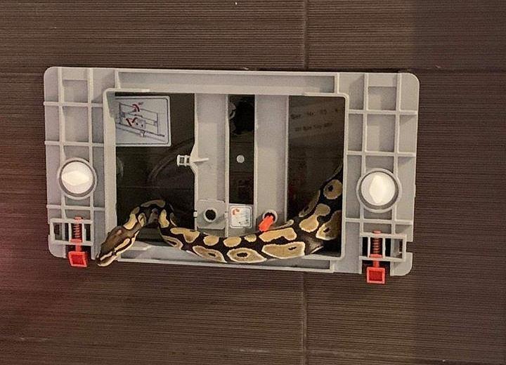 Pyton w spłuczce (fot. Facebook/Popowice Online)