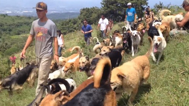 Raj dla psów