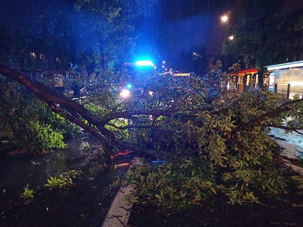Burza w Warszawie. Połamane drzewo po burzy