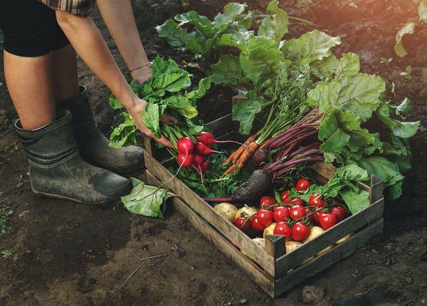 Warto znaleźć źródło dobrej jakości warzyw i owoców. RWS, czyli rolnictwo wspierane społecznie, to jedno z takich źródeł / Fot. Shutterstock.com