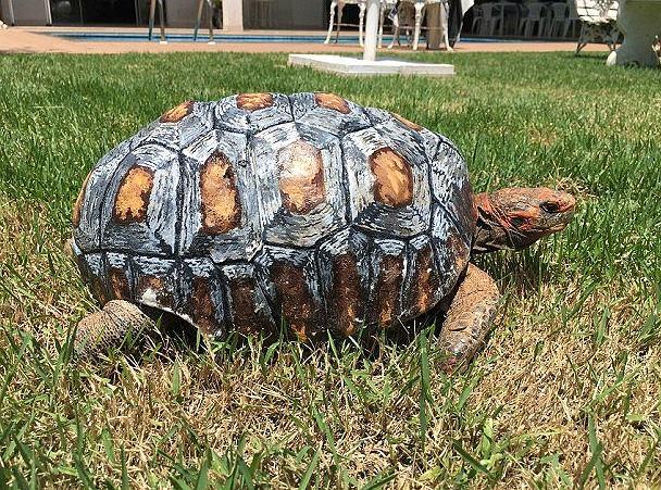 Zdjęcie numer 1 w galerii - Żółw stracił skorupę w pożarze. Naukowcy wydrukowali mu nową