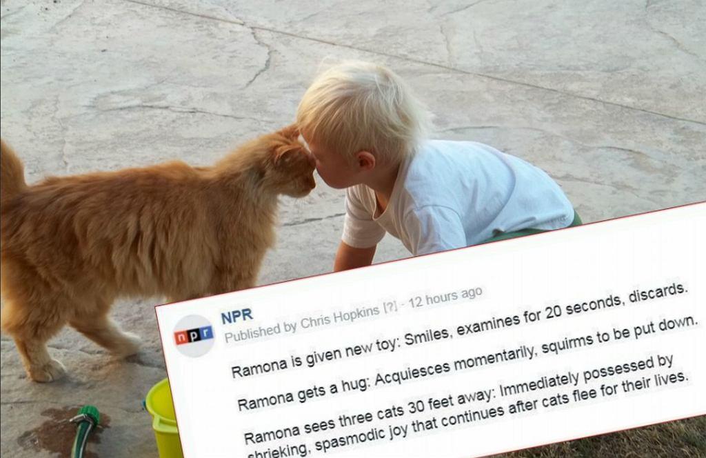 Przypadkowy status o Ramonie i kotkach zrobił furorę wśród czytelników NPR