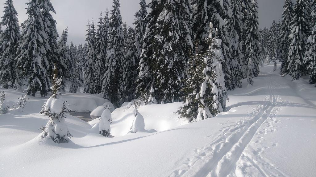 Na narty do Jakuszyc. Ślad założony przez narciarzy