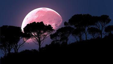 Kiedy można oglądać 'różowy Księżyc'?