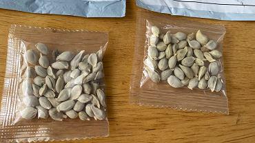 Tajemnicze przesyłki z nasionami z Chin. Państwowa Inspekcja Ochrony Roślin i Nasiennictwa ostrzega, by ich nie otwierać
