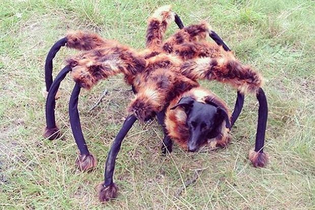 Święto Halloween już dziś, więc pora wyjąć maskę z szafy i wyjść na ulicę po kilka cukierków. Jeżeli nie masz odpowiedniego kostiumu lub po prostu wydaje Ci się, że jesteś za stary na zbieranie łakoci, to zestawienie na pewno pomoże zaspokoić twoje łaknienie strachu.