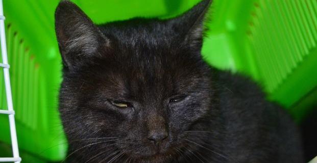 Kot gapowicz na pokładzie samolotu z Lublina do Warszawy. Ukrywał się pod siedzeniem