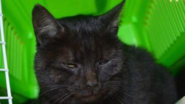 Kot znaleziony w samolocie na trasie Lublin -  Warszawa