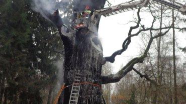 Dąb Chrobry płonął we wtorek rano