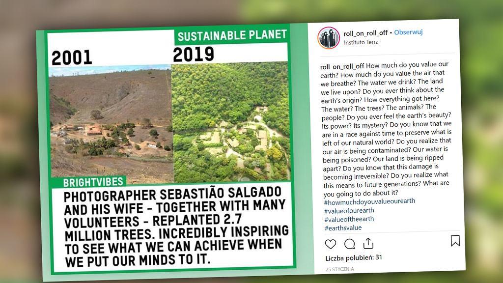 Fotograf z Brazylii odtworzył las z dzieciństwa. Razem z żoną posadził ponad 2 miliony drzew