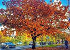 Złota polska jesień na waszych zdjęciach z Instagrama. Trzeba mieć szczęście, żeby to zobaczyć
