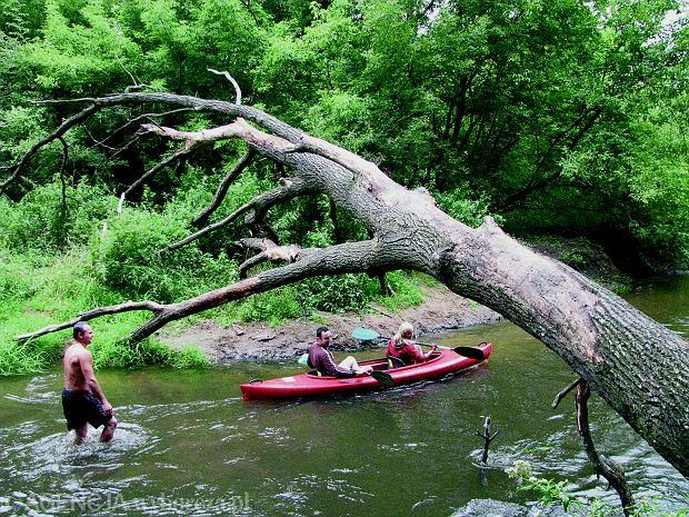 Rawka to rzeka zwałkowa, czyli możemy natknąć się na zwalone drzewa. 59
