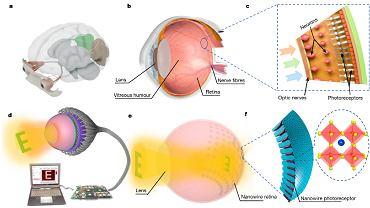 Naukowcy stworzyli oko cyborga. W budowie przypomina ludzkie i może działać na energię słoneczną