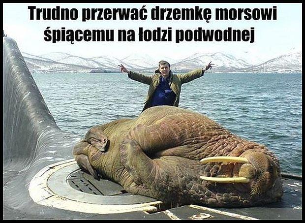 Zdjęcie pochodzi ze strony  http://www.crazynauka.pl/