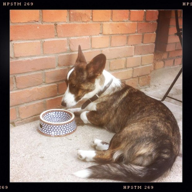 Psy w Secret Life cafe mają na Facebooku założony własny album ze zdjęciami