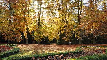 jesień (zdjęcie ilustracyjne)