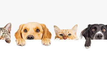 Filmy o zwierzętach często przedstawiają historie psów i kotów. Zdjęcie ilustracyjne, Susan Schmitz/shutterstock.com
