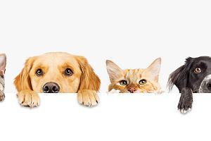 Filmy o zwierzętach. Które z nich warto zobaczyć?