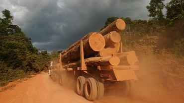 Amazonia - wyrąb lasów deszczowych