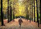 Od 1 marca wzrasta wysokość emerytur i dodatków. Jaka waloryzacja emerytur i rent w 2017 roku?