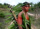 Wielkie pieniądze w obronie Amazonii. Fundusze inwestycyjne wzywają do ochrony przyrody