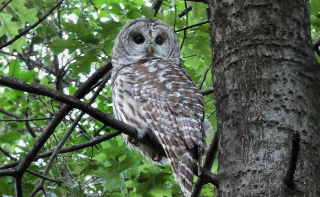 Mieszkańcy Nowego Jorku, a zwłaszcza miłośnicy ptaków nie kryją oburzenia okolicznościami, w jakich w piątek w nocy zginął puszczyk Barry, który stał się jednym z symboli Central Parku.