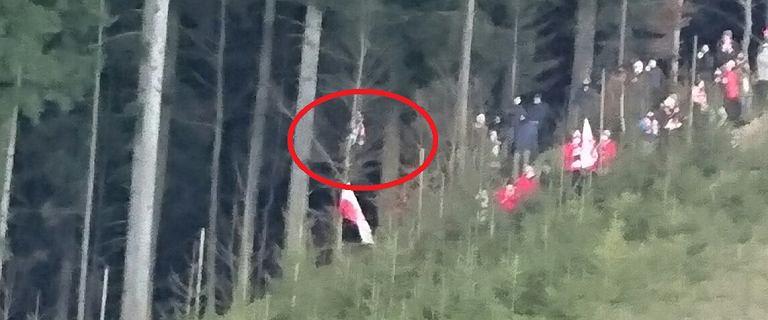 """Kibic z drzewa nagle ryknął do Kamila Stocha po fatalnym skoku. """"Słyszałem te okrzyki z lasu"""""""