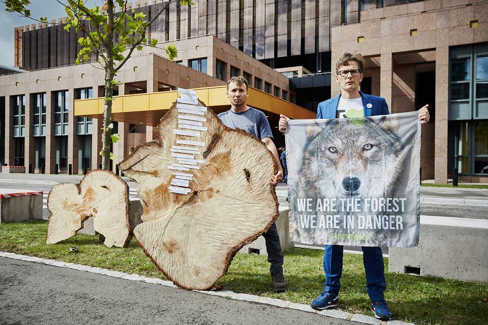 Ekolodzy apelują do sędziów Trybunału o podtrzymanie decyzji o zakazie wycinki. Na plastrze pnia 160-letniego świerka wyciętego przez służby leśne zaznaczone są ważne daty dla Polski i Puszczy, których świadkiem był ten świerk