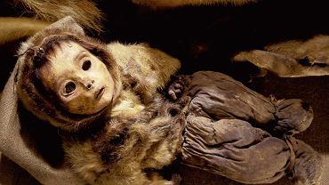 Globalne ocieplenie zagraża stanowiskom archeologicznym na Grenlandii. Na zdjęciu: mumia inuickiego dziecka pochowanego ok. 1475 r. Odkryta na stanowisku Qilakitsoq w zachodniej Grenlandii