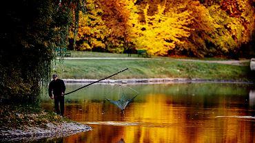 Złota jesień (zdjęcie ilustracyjne)
