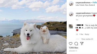 Nowe gwiazdy Instagrama. Wiecznie zadowolony pies Casper i nieustannie naburmuszony kot Romeo