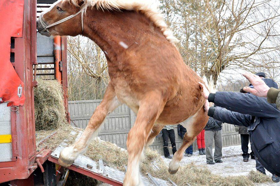 Zdjęcie numer 8 w galerii - Widziałam piekło koni, one błagają o pomoc. Czy nam nie wstyd?
