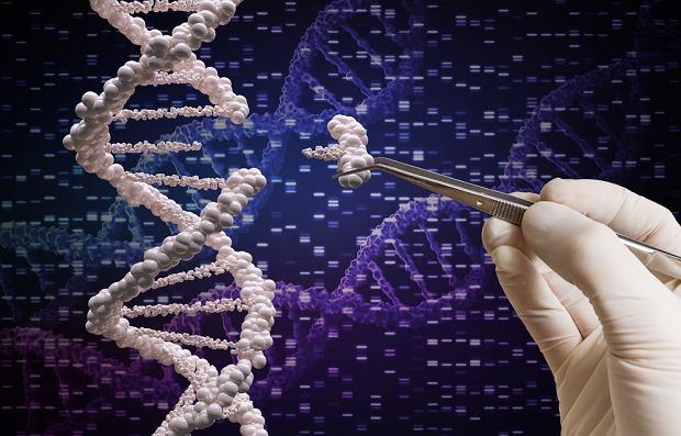 Po raz pierwszy naukowcy wyeliminowali HIV z genomów żywych zwierząt