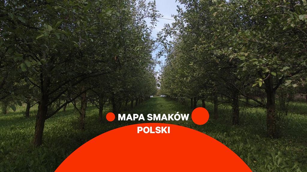 Mapa smaków Polski - suska sechlońska