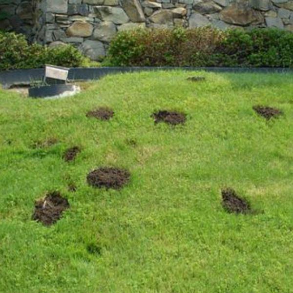 Jak odstraszyć szkodniki w ogrodzie?