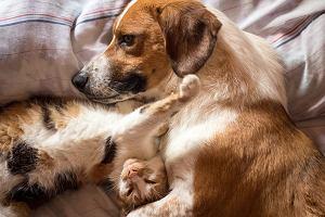 Ile kosztują domowe zwierzęta i ich utrzymanie? Uwaga na pseudohodowle i złej jakości karmę
