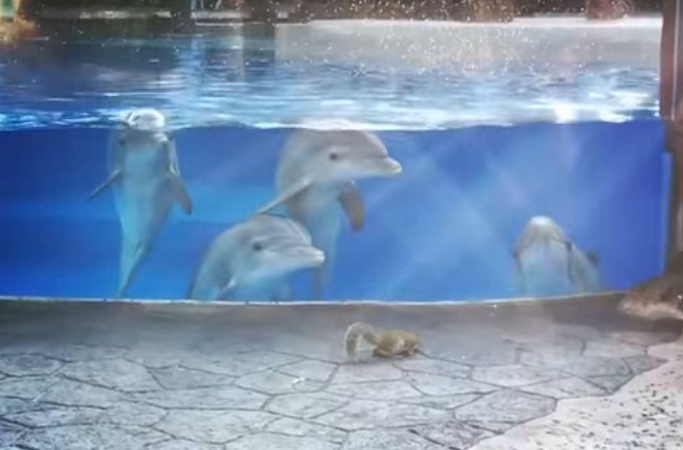 Delfiny obserwują wiewiórki |