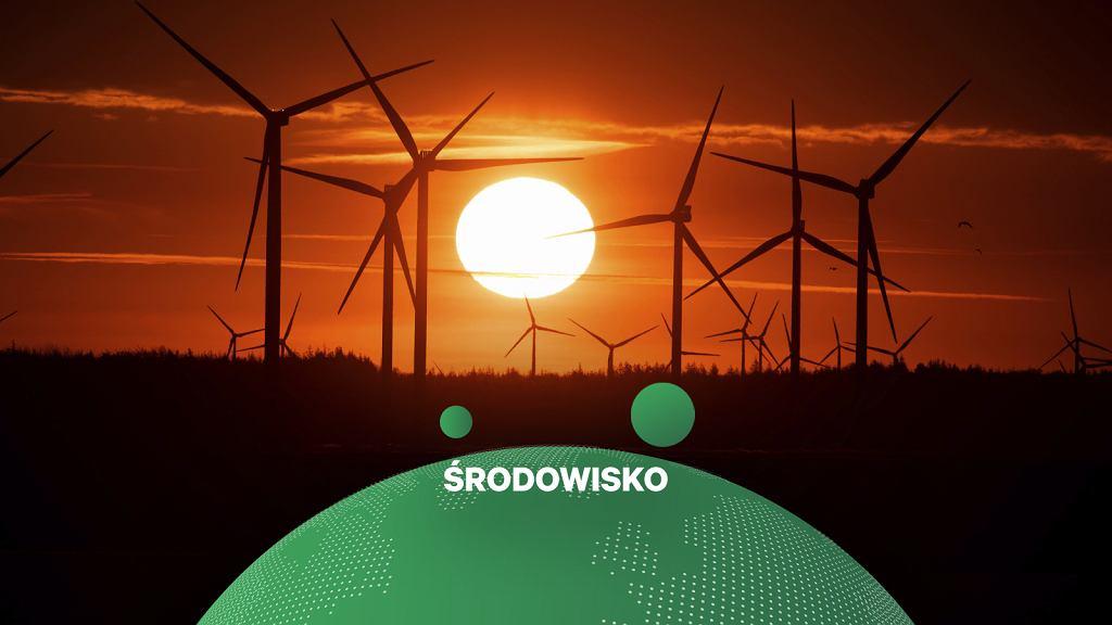 Niemcy. Farma wiatrowa w Soenke-Nissen-Koog w kraju związkowym Szlezwik-Holsztyn