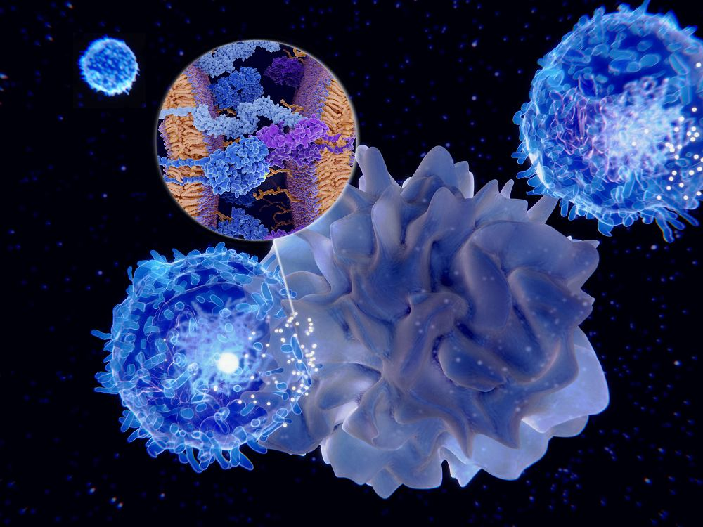 Komórki T