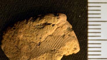 Odcisk palca znaleziony na odłamku ceramiki