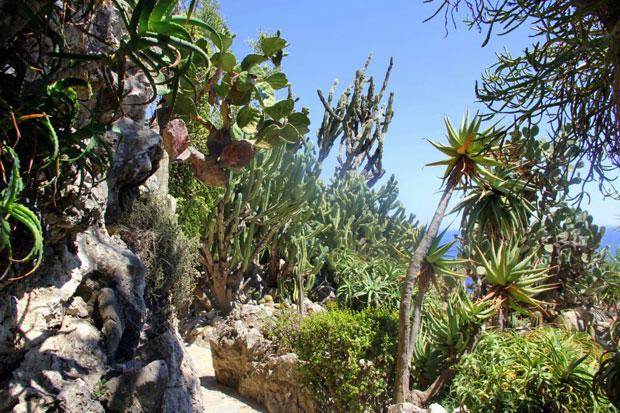 Podróże: Hazardziści, arystokraci i mafiosi w Monte Carlo, podróże, Monte Carlo - ogród botaniczny